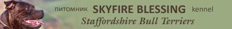 staffordshire.ru - питомник стаффордширских бультерьеров Skyfire Blessing